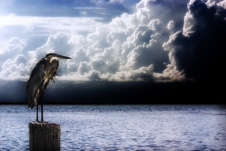 heron and clouds